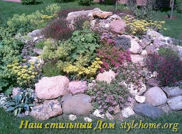 Как засадить растениями альпинарий и как за ним ухаживать