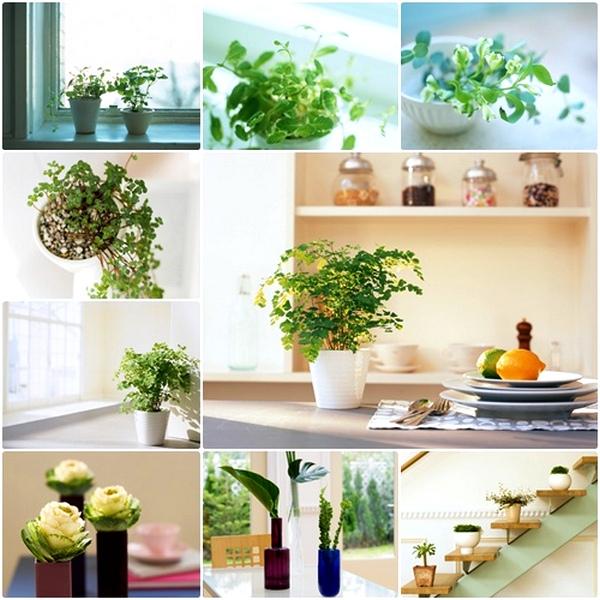 Способы размещения цветов и растений в интерьере