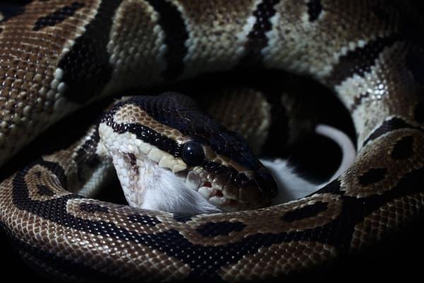 Петербуржец обнаружил в своей квартире экзотическую змею
