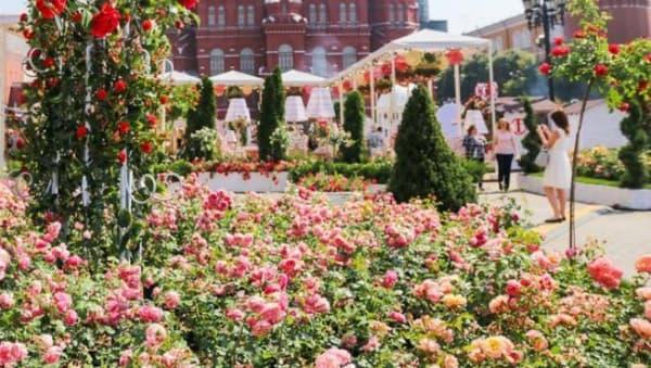 Шесть садов появятся на территориях Cоцучреждений в Москве в рамках «цветочного джема»