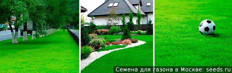 Купить газонную траву в Москве. Отличная всхожесть, приятные цены, индивидуальный подход!