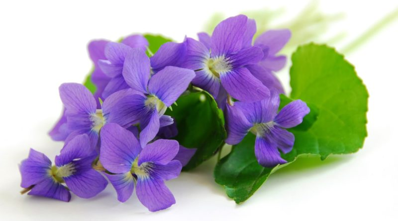 Мужской цветок ирис