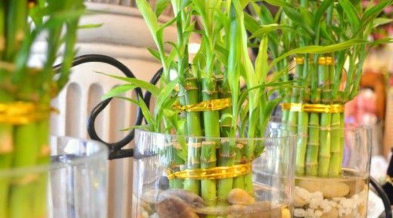 Пять причин, почему не стоит выращивать бамбук в своем дворе.