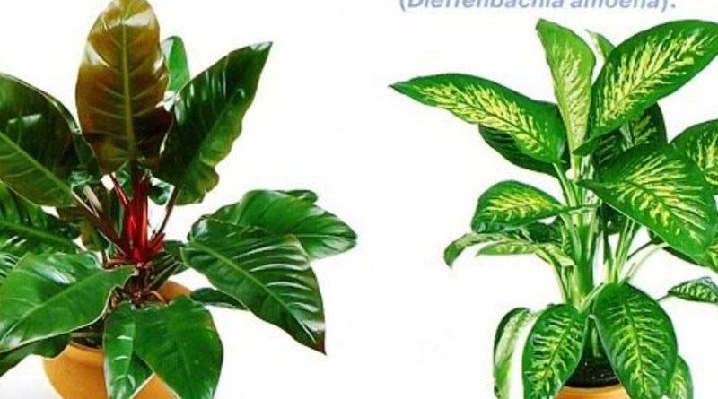 Классификатор комнатных растений по внешнему виду — продолжение