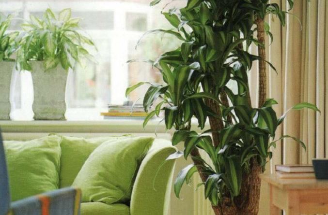 Комнатные растения, как предмет интерьера
