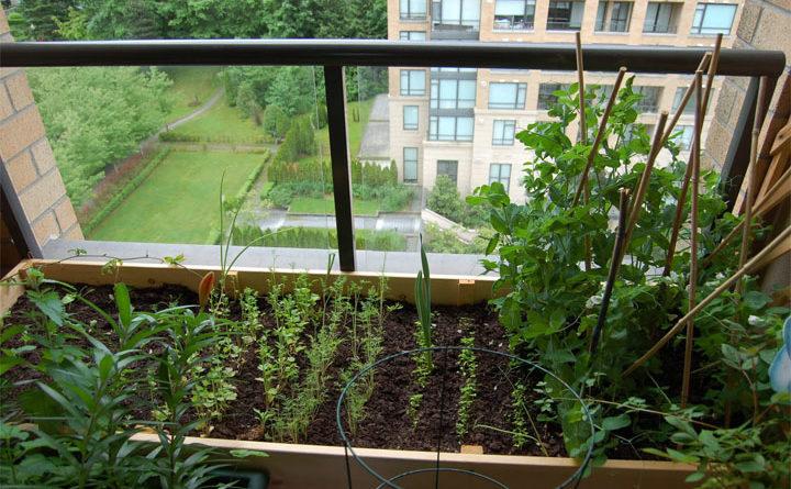 Огород в квартире.