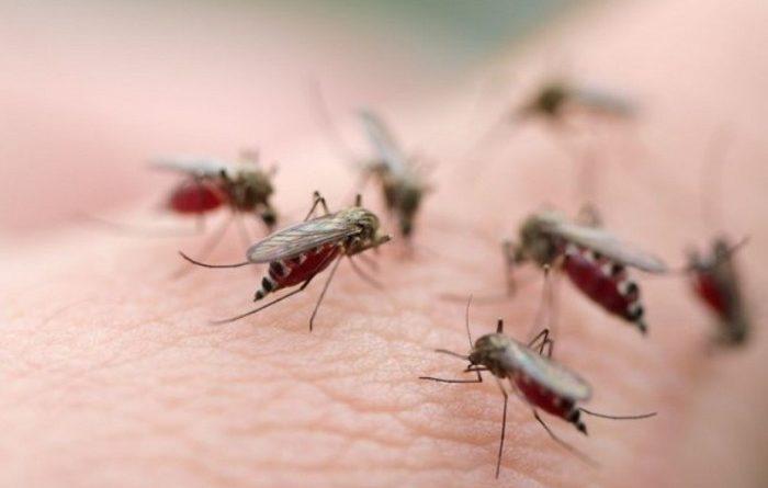 Как избавиться от комаров?