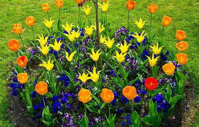 Как выбрать цветы для клумб?