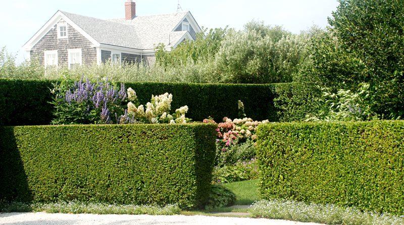 Какие растения подойдут для естественной ограды участка