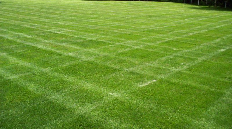 Рулонный газон на Вашем участке