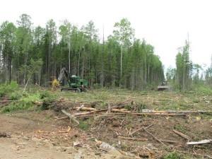 John Deere признан крупнейшим поставщиком лесозаготовительной техники