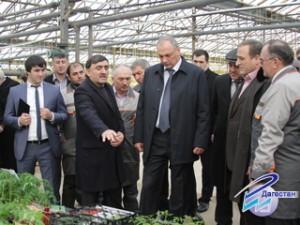 Со строительством тепличного комплекса поселка Новострой ознакомился Президент РД